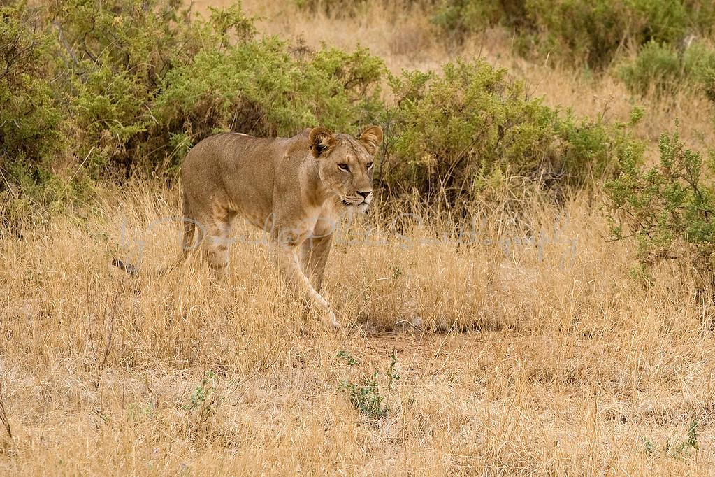 20100903_Samburu_0666