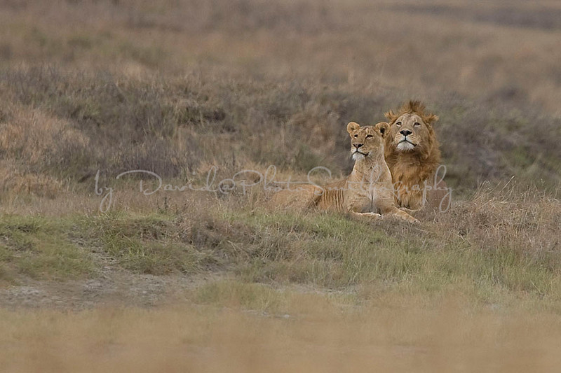 2007 07 18 Ngorongoro 246