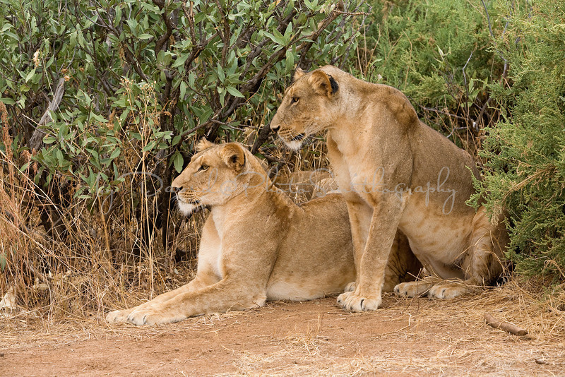 20100903_Samburu_0703