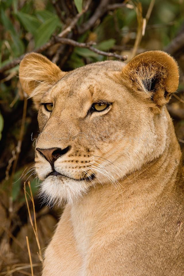 20100903_Samburu_0557
