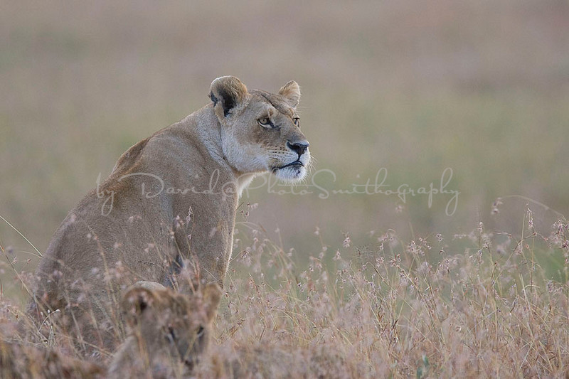 2007 07 24 Masai Mara 108