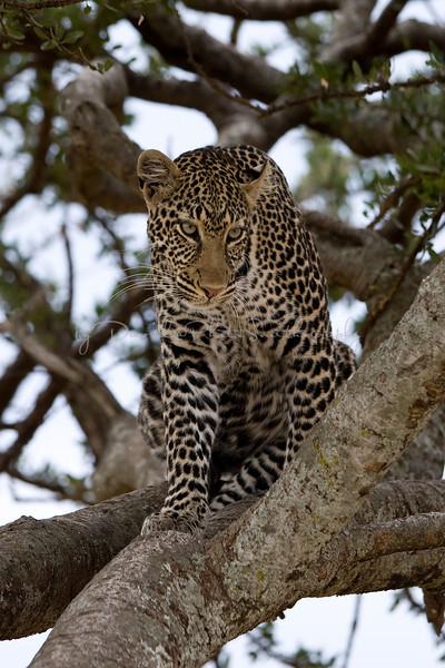 20100908_Maasi Mara_076