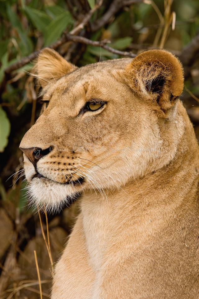 20100903_Samburu_0556