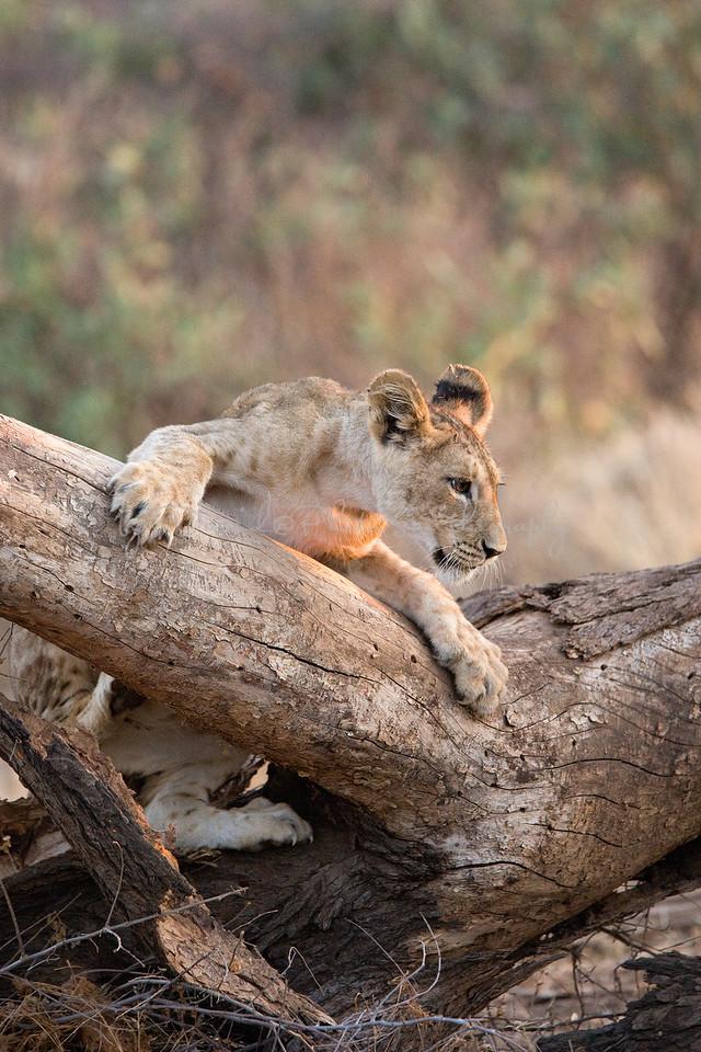 20100903_Samburu_061