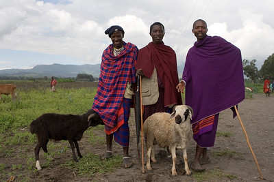 Masai cattle market in Arusha