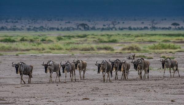 Tsavo East, Kenya.  Photo by: Stephen Hindley ©