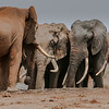 Tsavo East, Kenya safari.  Photo by: Stephen Hindley ©