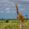 Tsavo East Safari to Satao,   Photo by: Stephen Hindley©