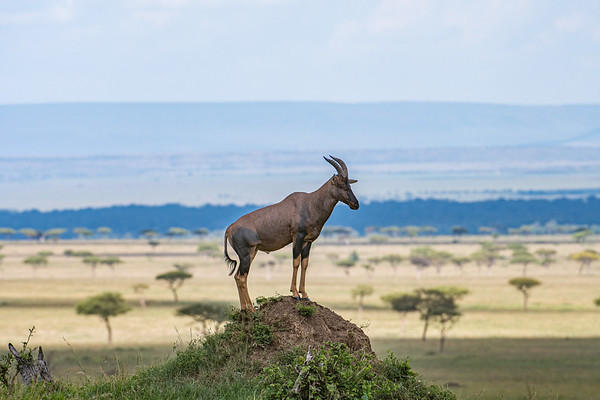 Masai Mara safari with Mel, Lily and Chelsey.  Mara Engai Tented camp in The Mara Triangle.  October 30 to November 2nd, 2017.  Photo by: Stephen Hindley ©