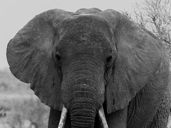 Tsavo East, Kenya safari.  Photo by: Stephen Hindley ©