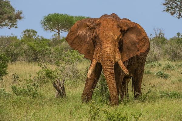 Mombasa and Tsavo East, Kenya safari.   Photo by: Stephen Hindley ©