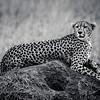 Ngorongoro Crater, Tanzania.  Tanzania Safari 15th-21st May 2010.  Photo by: Stephen Hindley