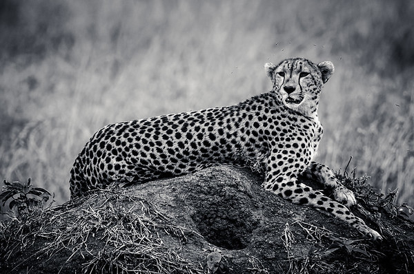 Ngorongoro Crater, Tanzania.  Tanzania Safari  Photo by: Stephen Hindley
