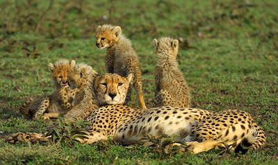 Serengeti family