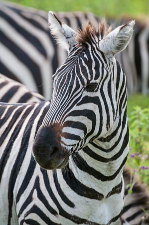 Ngorongoro Crater, Tanzania.  Tanzania Safari .  Photo by: Stephen Hindley
