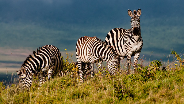 Ngorongoro Crater, Tanzania.  Tanzania Safari .  Photo by: Stephen Hindley