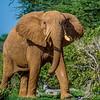 Tsavo East Safari to Satao,  23rd-28th November, 2014 Photo by: Stephen Hindley©