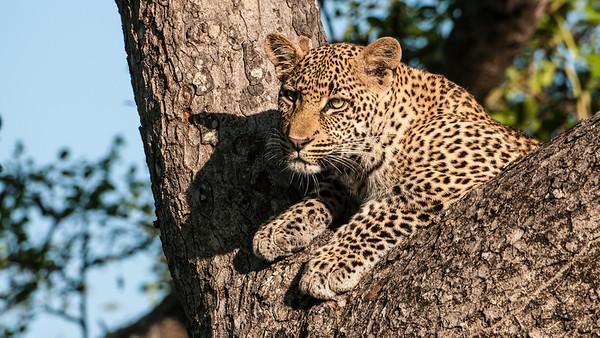 Sabi Sands Photo Safari