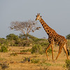 Tsavo East, Kenya.  Photo by: Stephen Hindley ©