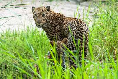 Sabi Sands Photo Safari