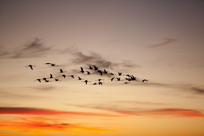 Flamingo sunset - South Africa