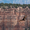California Condor in flight over the Grand Canyon