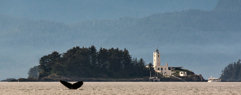 Frederick Sound & Stephen's Passage - Whale tail & lighthouse seen from skiff