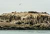 Glacier Bay - South Marble Island