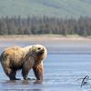 0680_Alaska_Bears_06132021-2-1