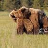7263_Alaska_Bears_06132021-2-1