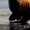 0822_Alaska_Bears_06132021-5a-1