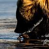 0787_Alaska_Bears_06132021-5a-1