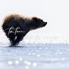 2094_Alaska_Bears_06152021-2-1