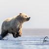 1956_Alaska_Bears_06152021-2-1