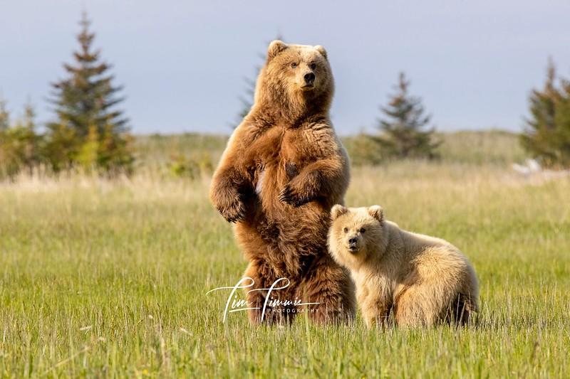 7847_Alaska_Bears_06162021-10-1