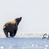 2290_Alaska_Bears_06152021-2-1