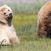 5965_Alaska_Bears_06132021-2-1