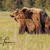 7262_Alaska_Bears_06132021-2-1