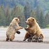 4350_Alaska Bears_06172021-2-1