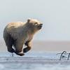 1959_Alaska_Bears_06152021-2-1