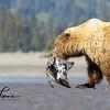 2382_Alaska_Bears_06152021-2-1