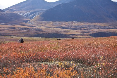 "Photo opportunity on the Nigu River located in the Gates of the Arctic National Park and Preserve in the Brooks Range of Alaska.  Nigu translates to ""Rainbow.""  Seven days on the tundra with the migrating Caribou."