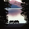 Brown Bears on Patrol