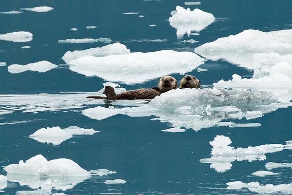 Sea Otters - Valdez