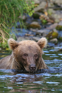 Grizzly I
