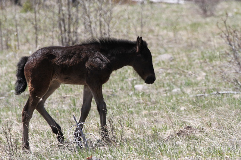 Wild Horse - YaHa Tinda Valley AB