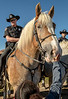 Albuquerque Mounted Police and Belgian Horses at the Fiesta