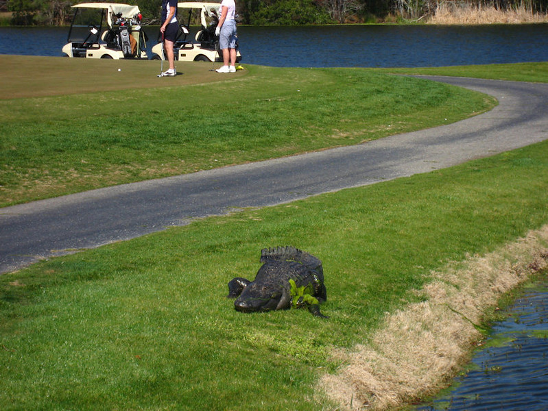 IMG_6780-1Ali what golfers 031308