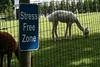 Little's Lane Alpacas - Newbury, MA  (June 6, 2007)<br /> <br /> Stress Free Zone - ya gotta luv it :)