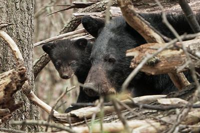 Mindy's Cubs 2019